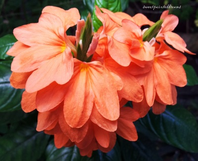 The Mysterious Orange Flower