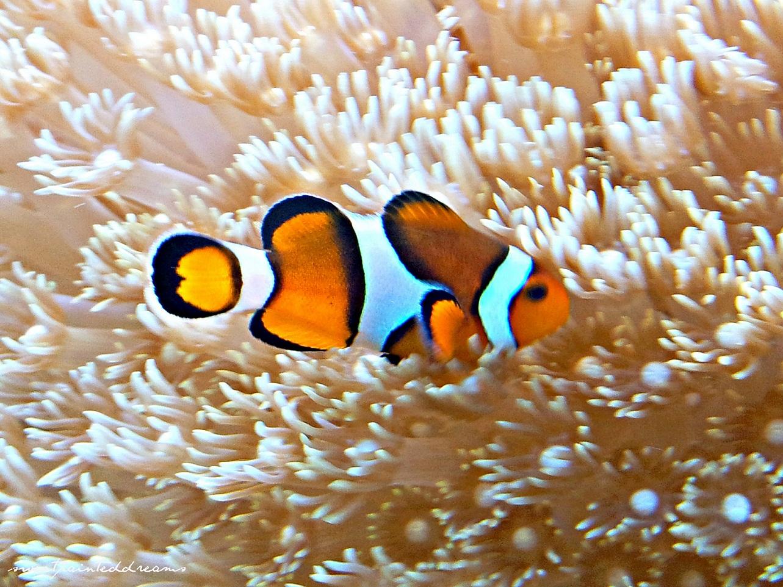sea anemones – my sweetpainteddreams