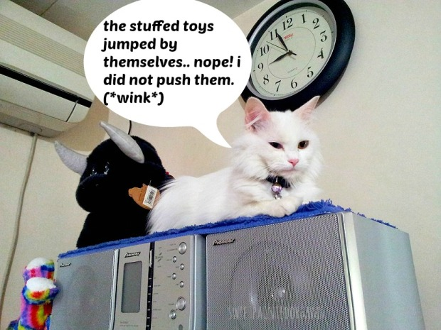Star on top of the stereo. Where are the other stuffed toys Star? #Caturday